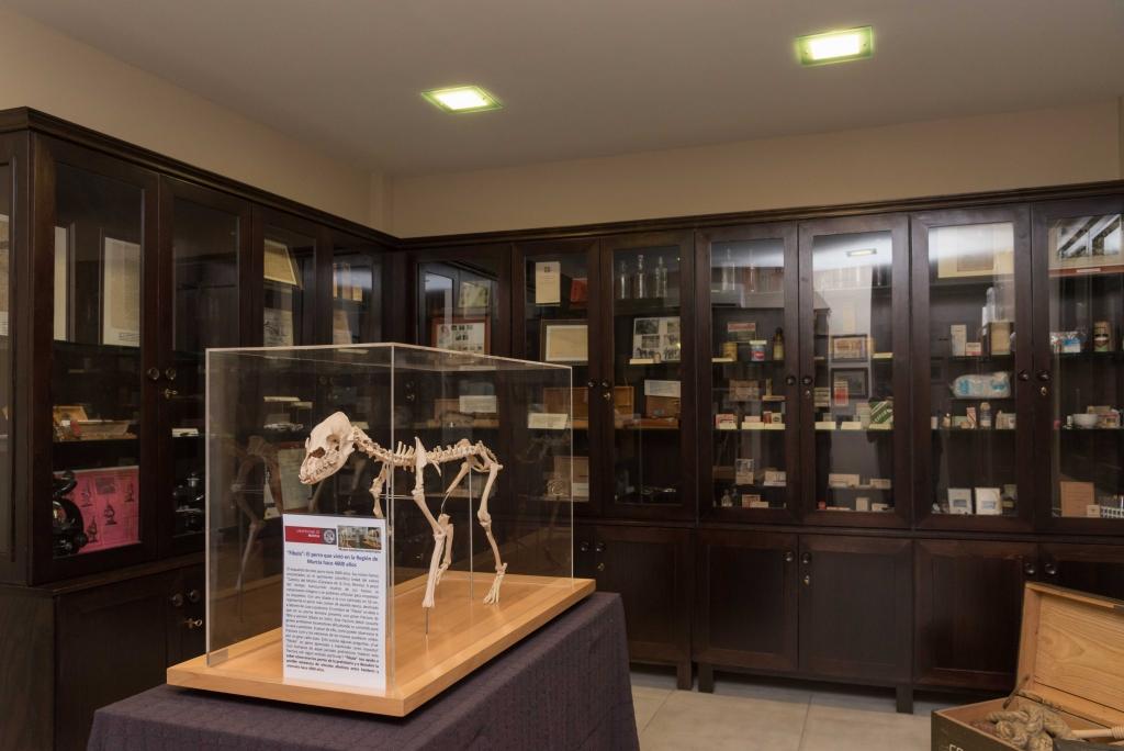 Museo Veterinario (10)
