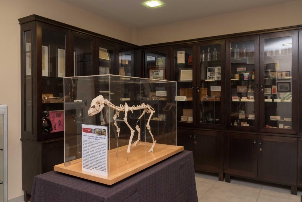 Museo Veterinario (28)