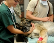 veterinary-85925_1920