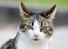 cat-3418815_1920