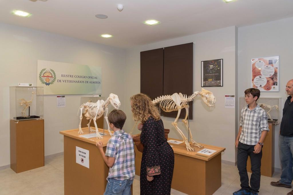 Museo Veterinario (13)