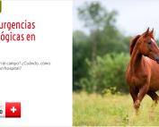 PY097091_WS_PVazquez_trauma_equino_cabecera